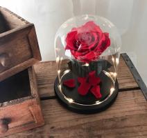 Роза в колбе VIP 28 см / бутон 10-12 см