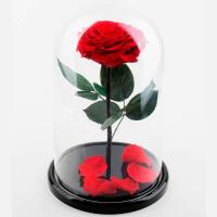 Роза в колбе Премиум Красная / Premium (Большая 28 см)