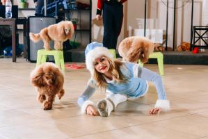 Шоу дрессированных собак